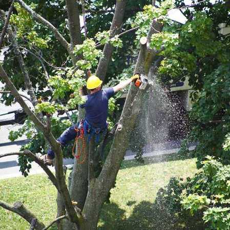 Tree Service, Tree Removal, Tree Trimming, Chesapeake VA