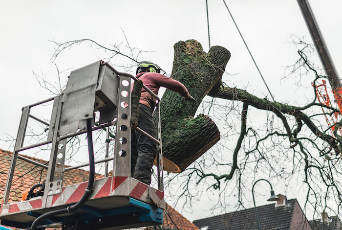 Tree Removal Service - Hoisting down a large section of tree trunk
